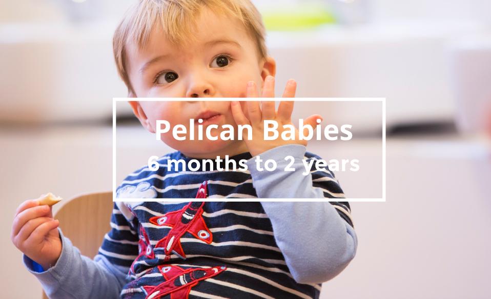 Pelican Babies.jpg