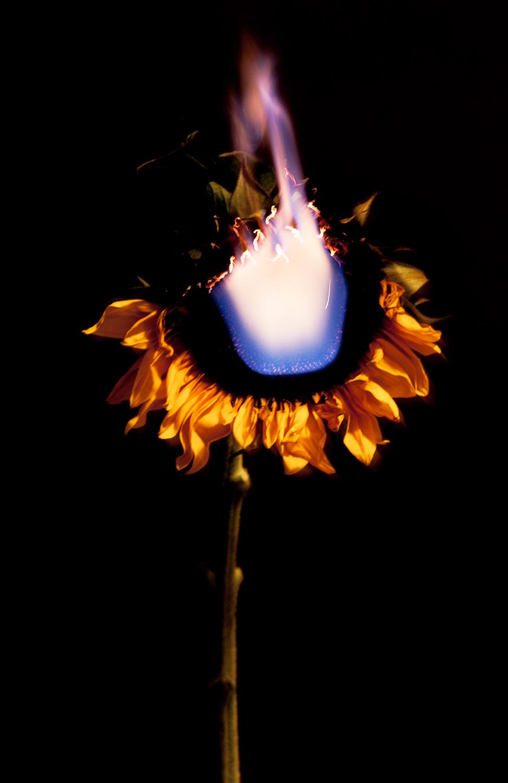 AnnieBuado_sunflower.jpg