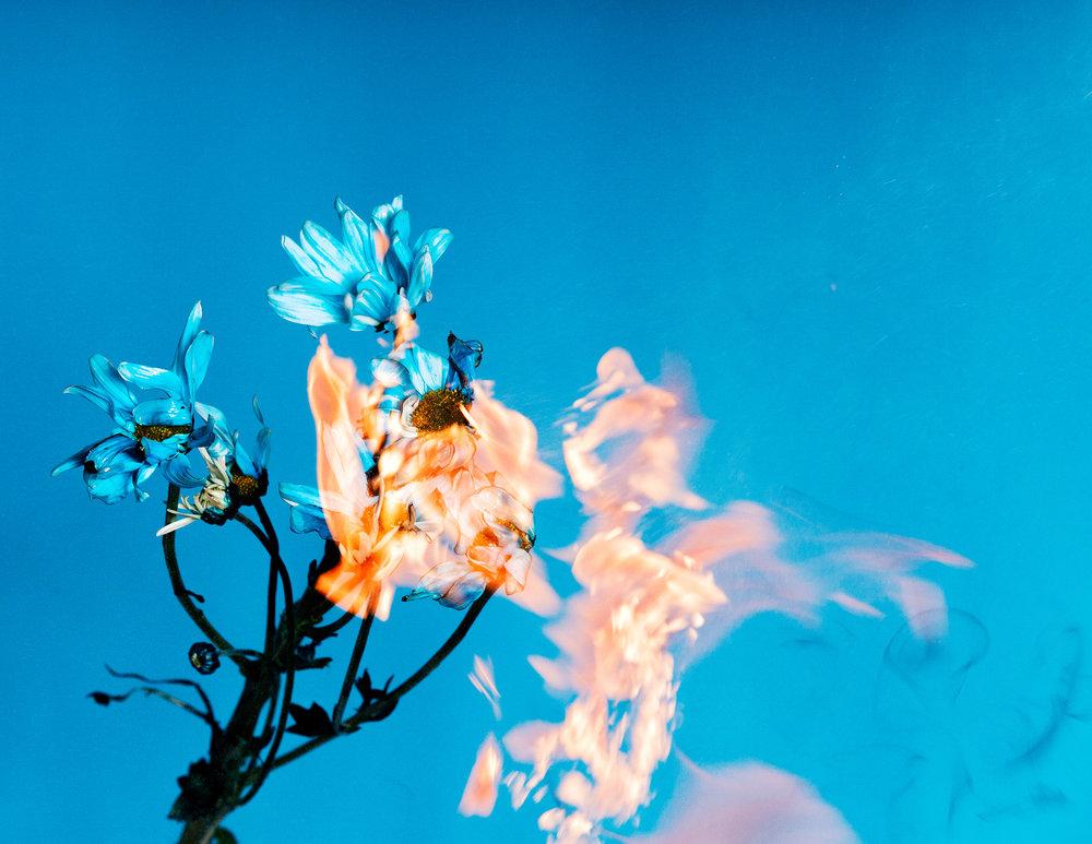 08_blueflowers_01.jpg