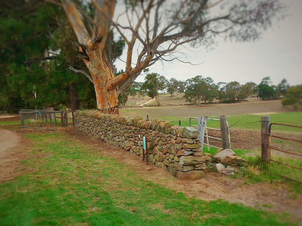 Historic Dry Stone Wall Rebuild Strathalbyn, Adelaide Hills, South Australia