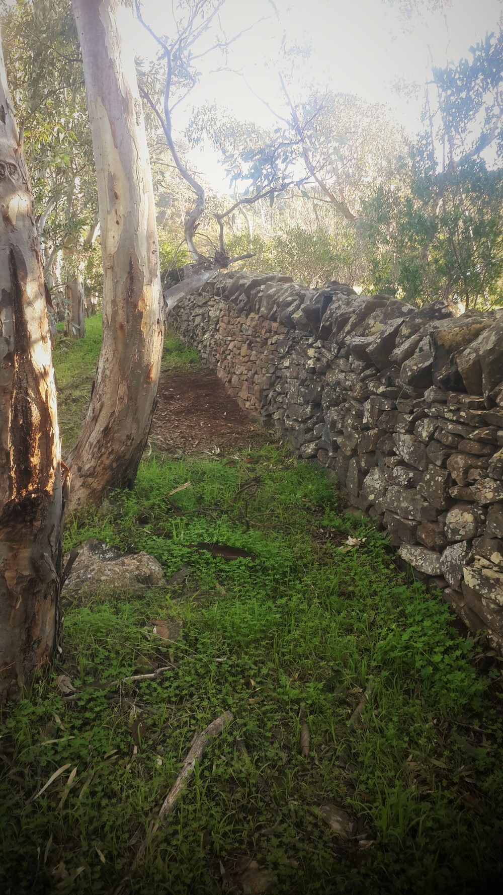 Historic Dry Stone Field Wall after repair, Highland Valley, South Australia