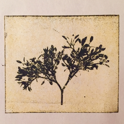 A fragile branch, printed on newsprint.