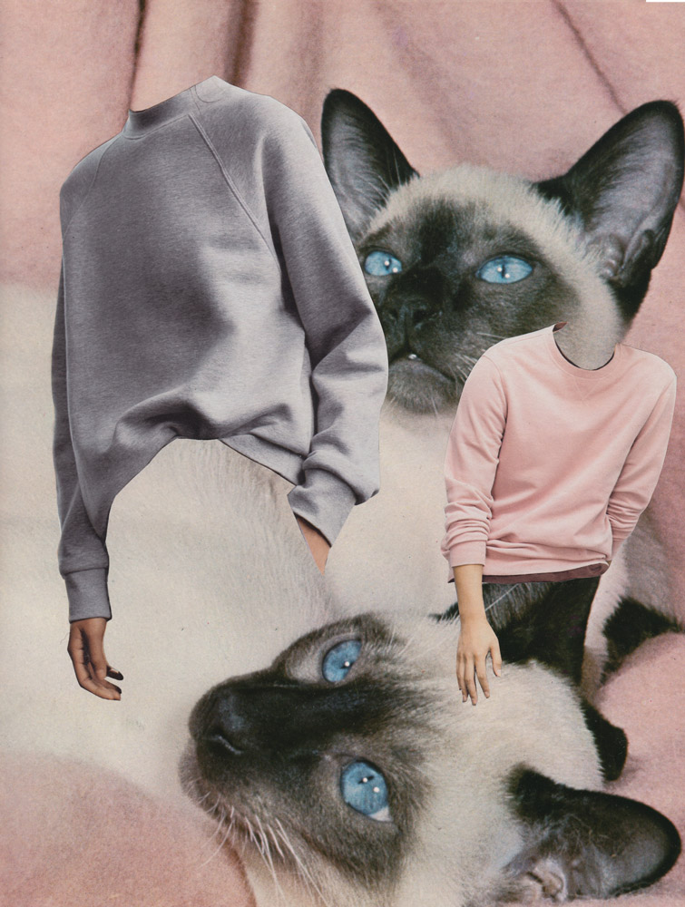 Cat-Sweaters.jpg