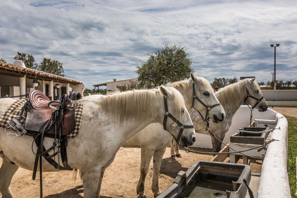 écuries-chevaux-camargue-auberge-cavaliere-du-pont-des-bannes-43.jpg