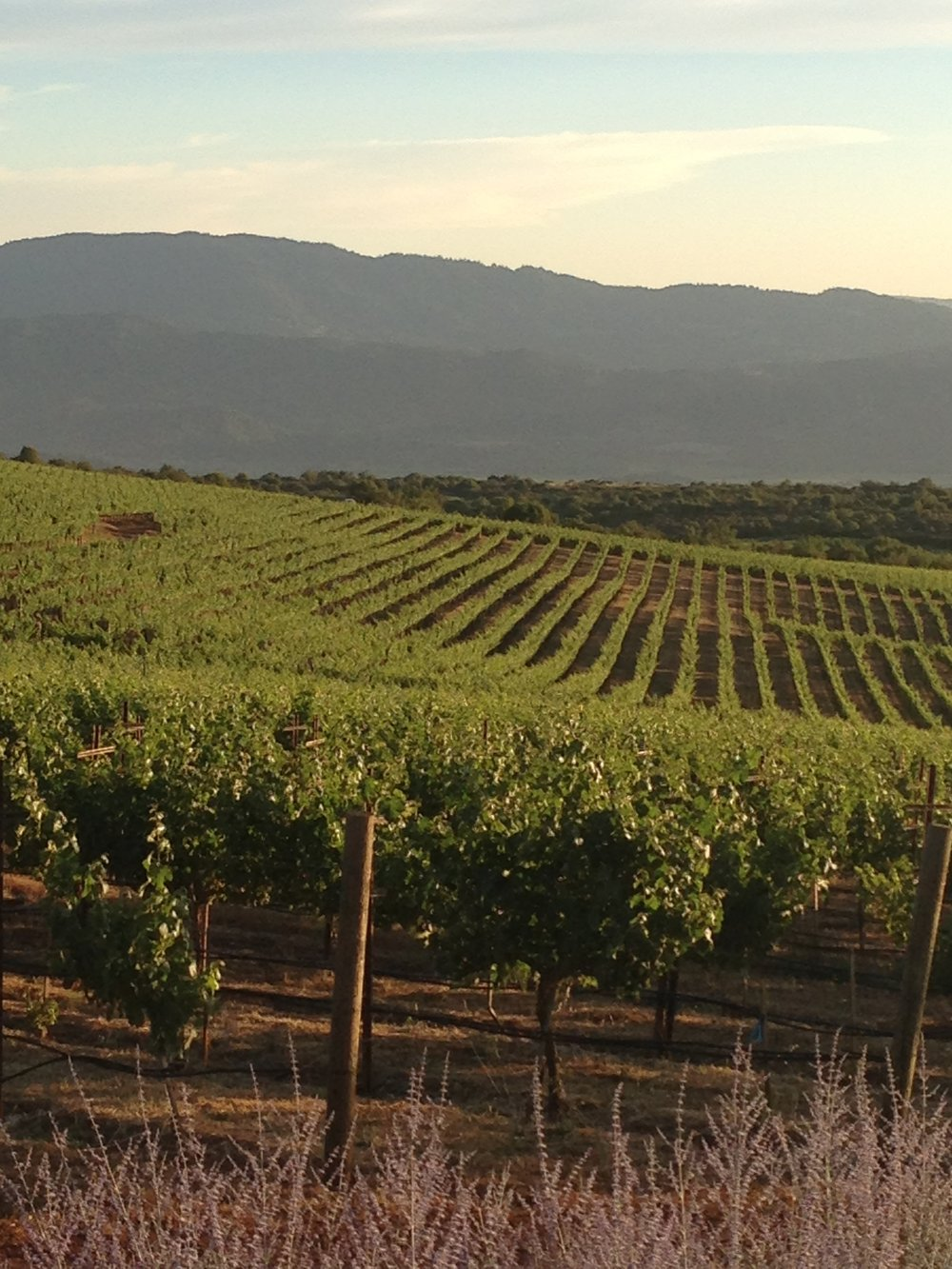 Stagecoach Vineyard.jpg