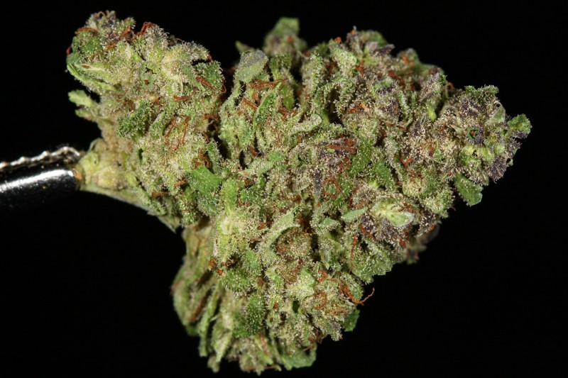 blueberry-strain-theory-800x533.jpg