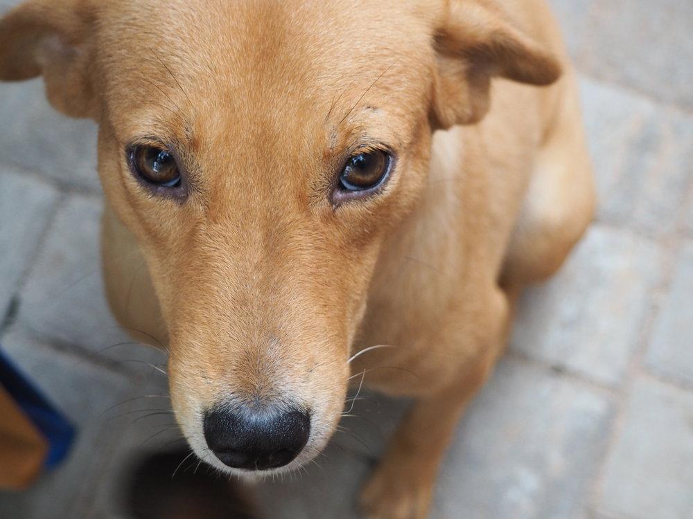 RINGA MORINGA, Chief Dog