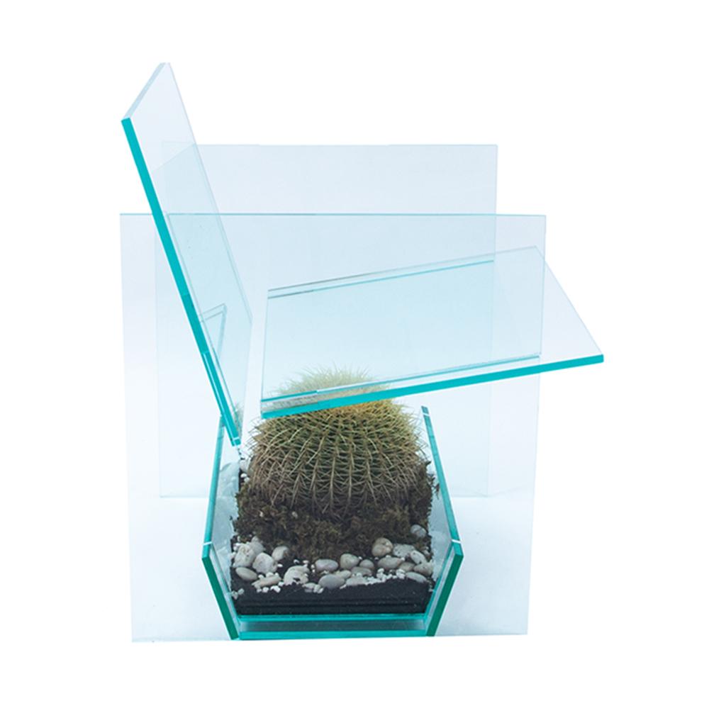cactus7ns.jpg