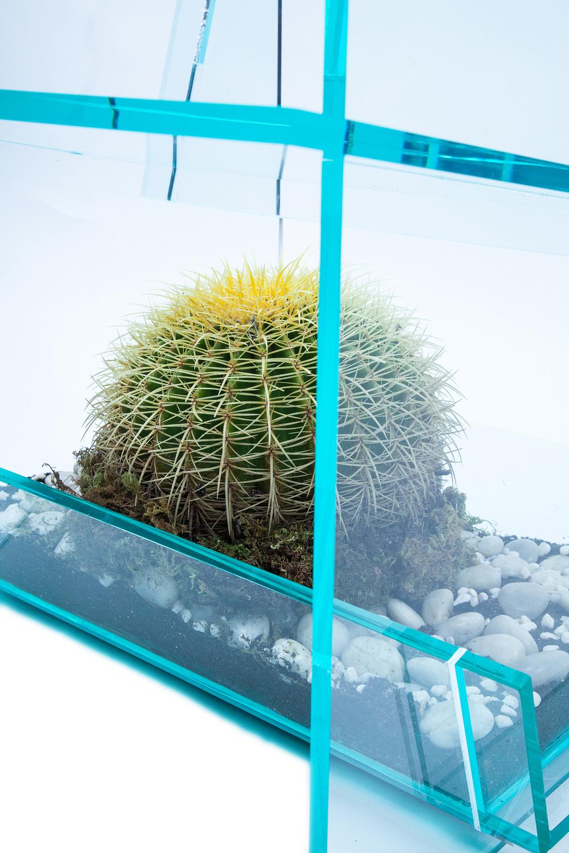 cactus14(2)ns.jpg