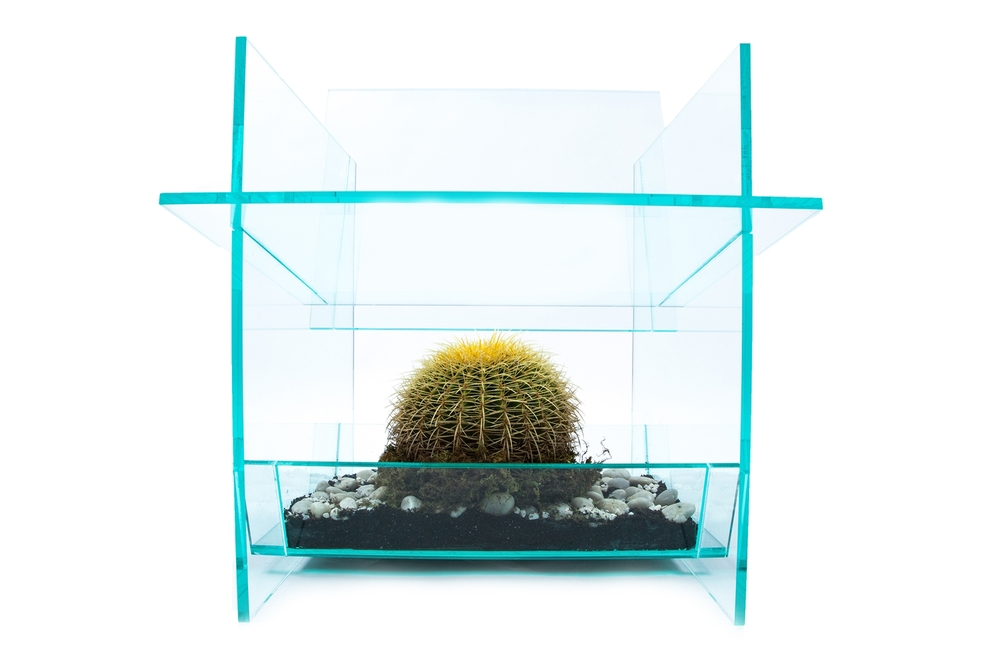 cactus4(2)ns.jpg