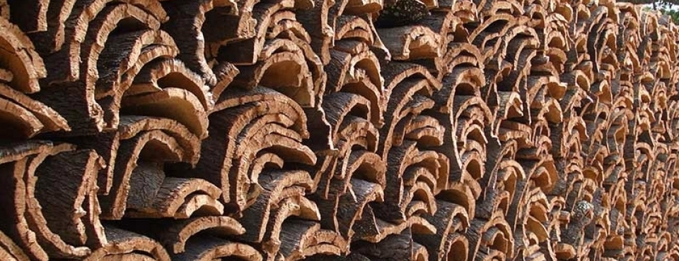Cork production does not kill, or even damage the trees from which it comes. In fact, with a bare trunk, the tree absorbs three to five times the CO2 to aid the regeneration process.