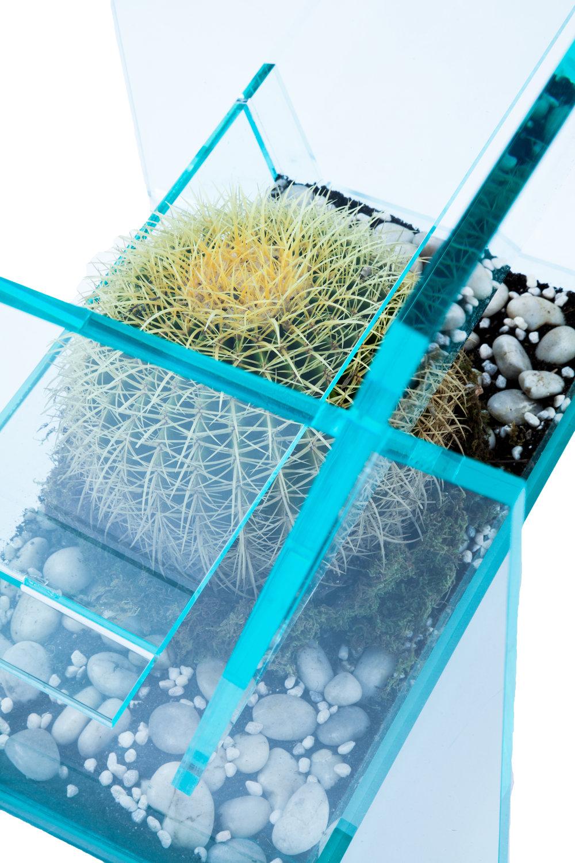 cactus17(2).jpg