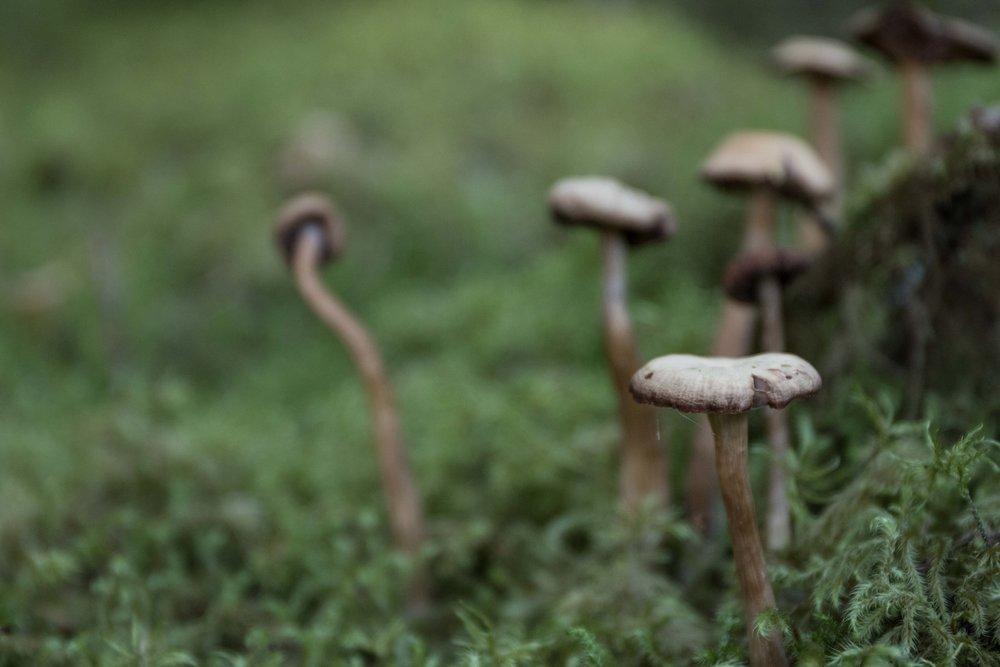 Mycelium macro