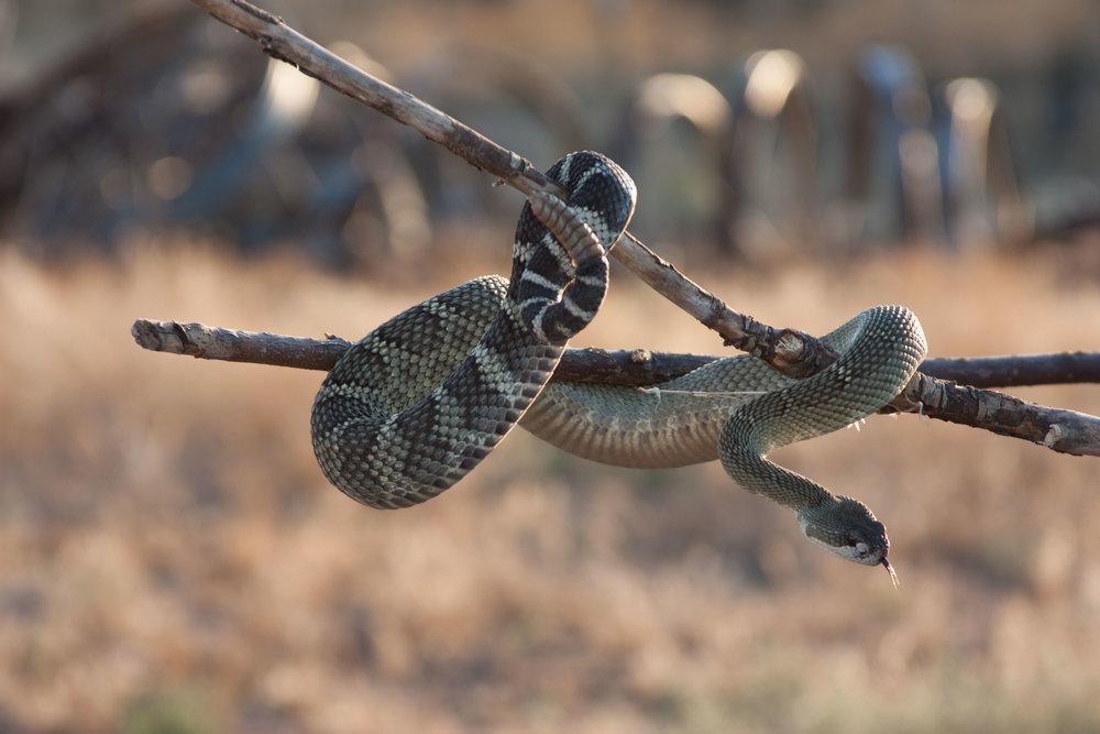 Farmer snake charming