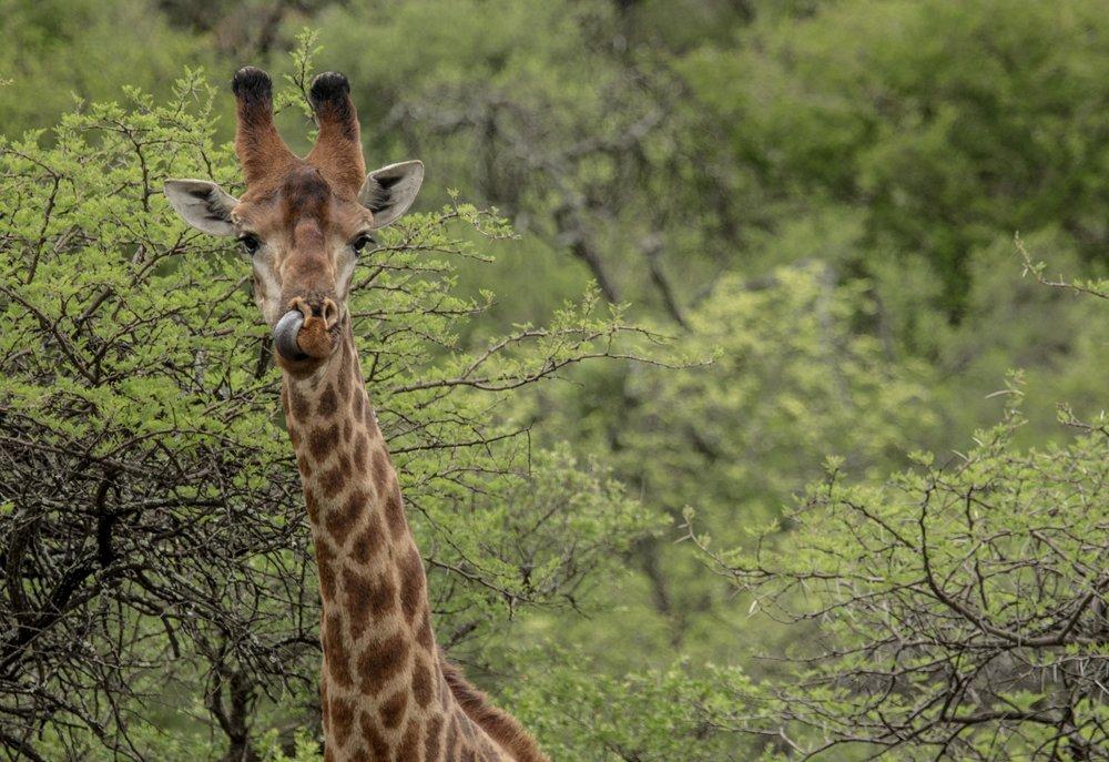 WildlifeAfr-8.jpg