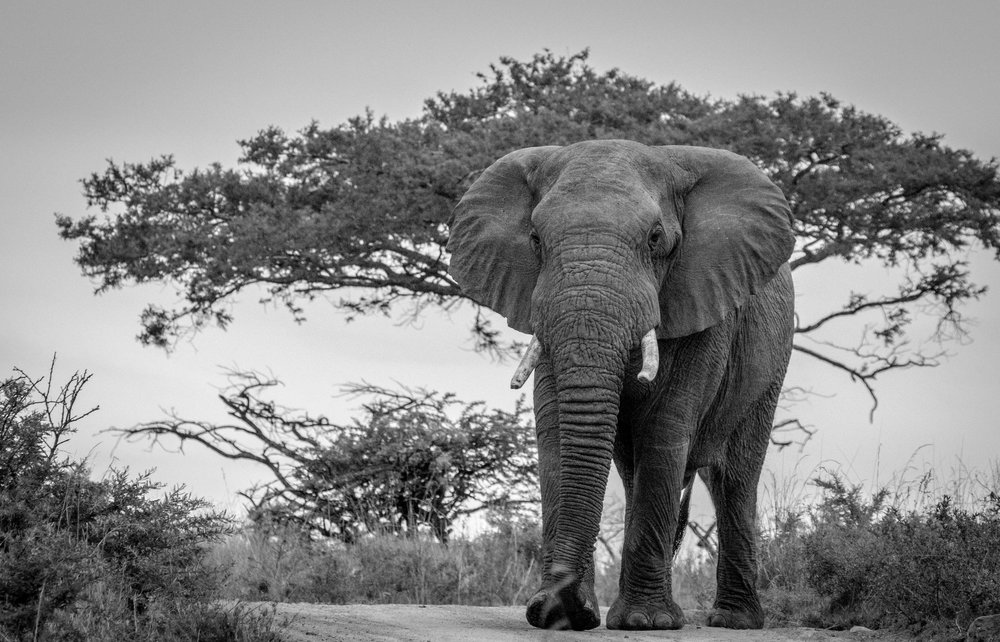 WildlifeAfr-9.jpg