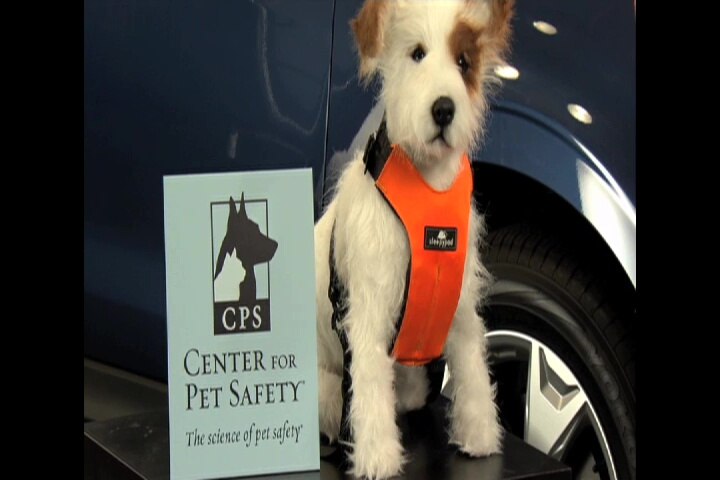 Subaru Center for Pet Safety SMT-3.jpg