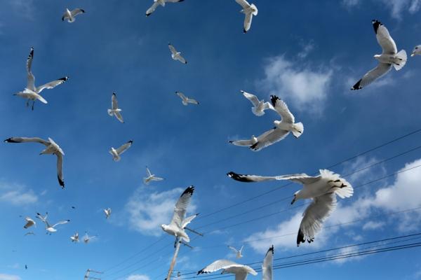 gulls 1.jpg