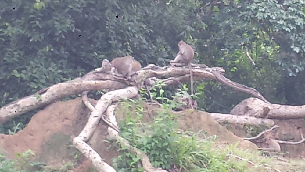 Oh hey, monkeys.