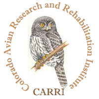 Colorado Avian Research and Rehabilitation Institute