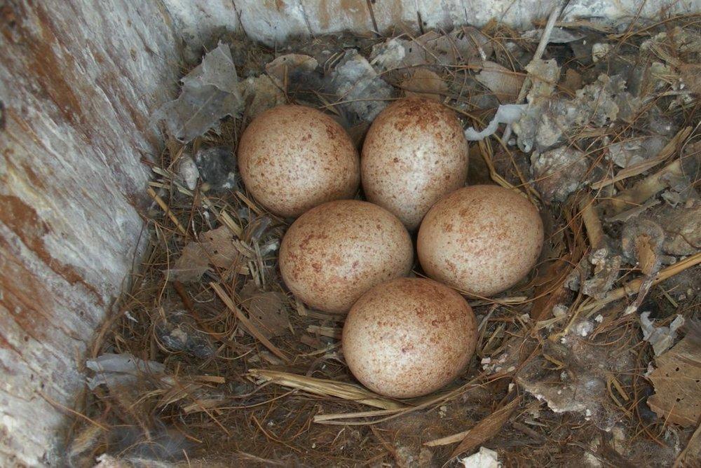 eggs.150.jpg