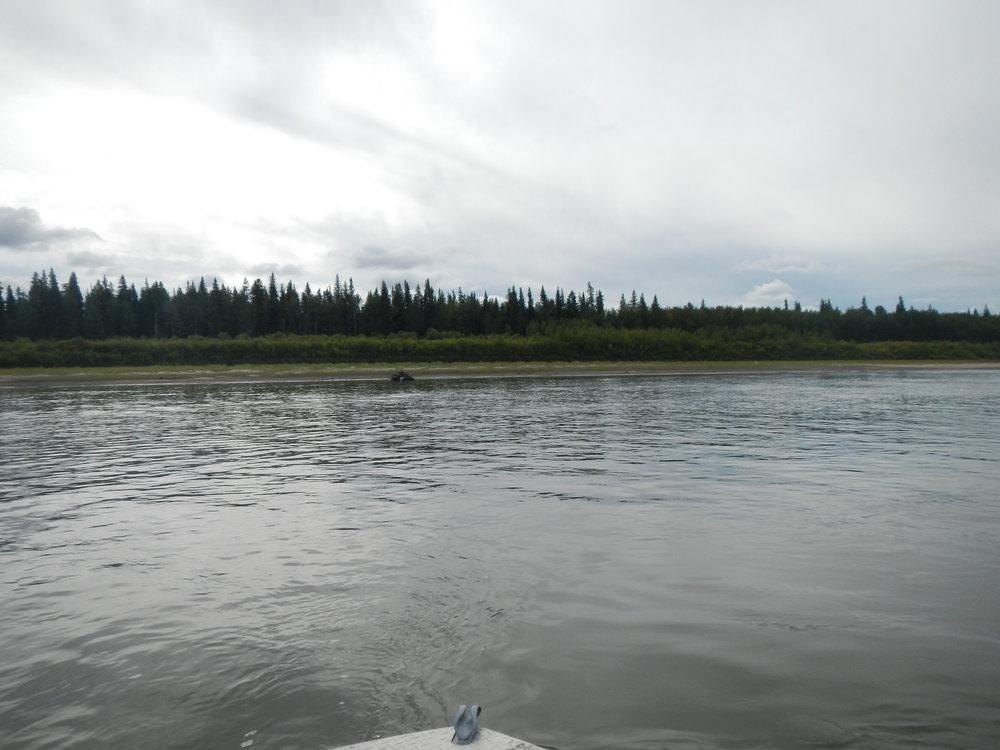 Athabasca at emb high.jpg