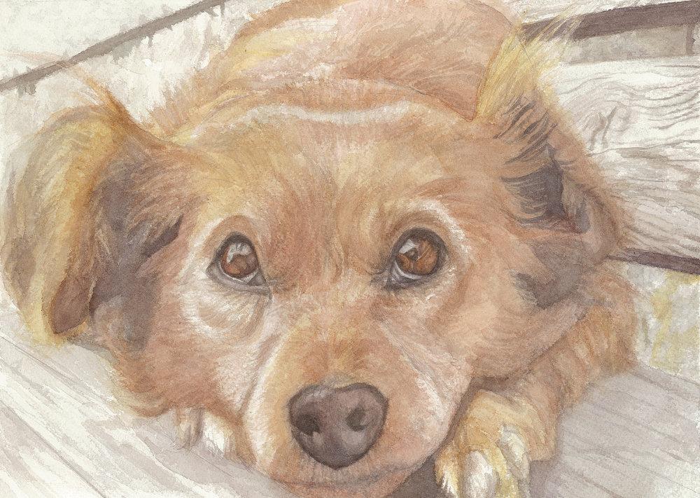 A Sweet Dog