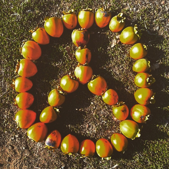 Persimmons from our tree creating a version of the Peace Sign!