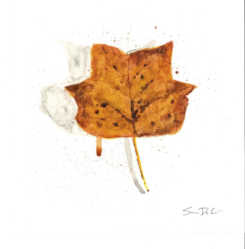 Tulip Poplar Leaf Portrait 011