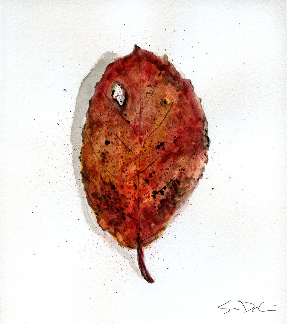 Elm Leaf Portrait 021