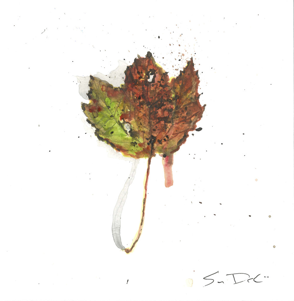 Red Maple Leaf Portrait 045
