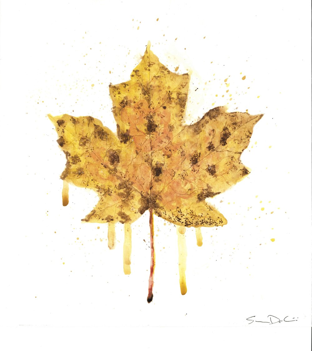 Maple Leaf Portrait 004 - SOLD