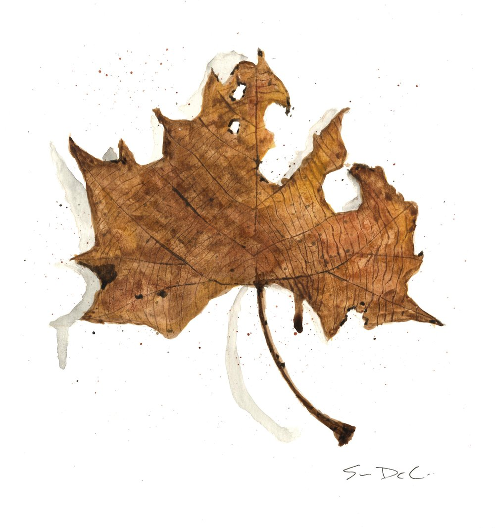 Maple Leaf Portrait 012 - SOLD