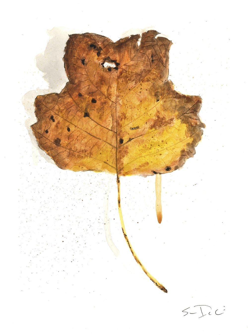 Leaf 018.jpg