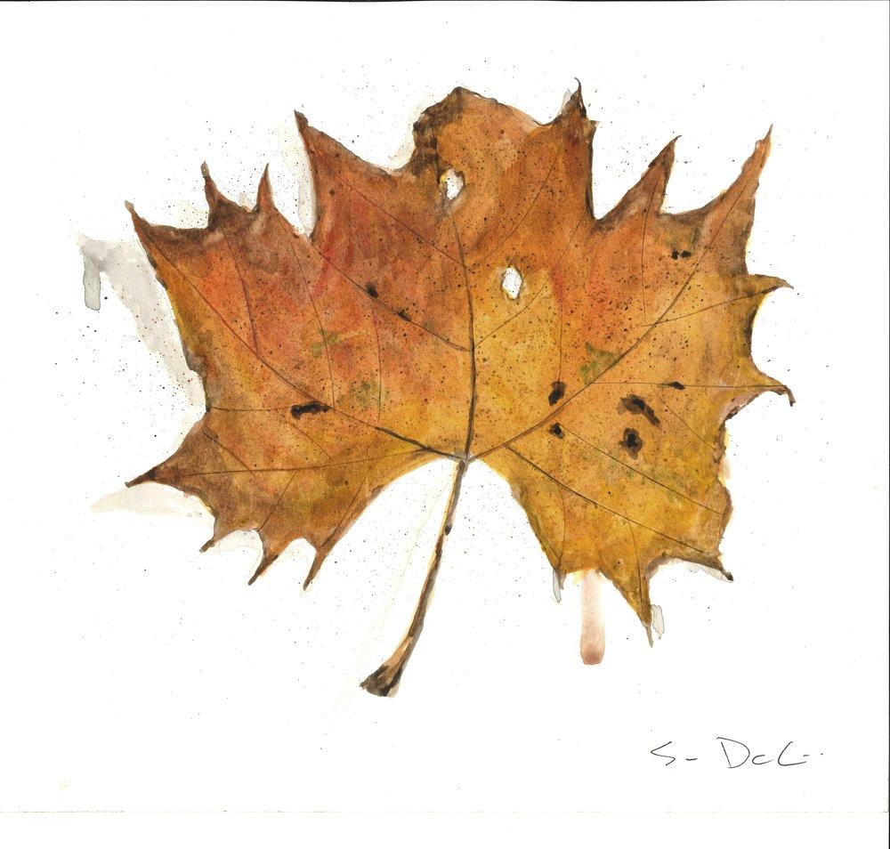 Leaf 017.jpg