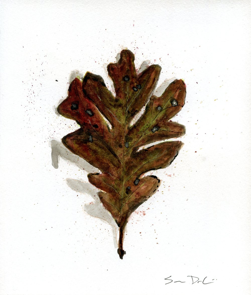 Leaf 019.jpg