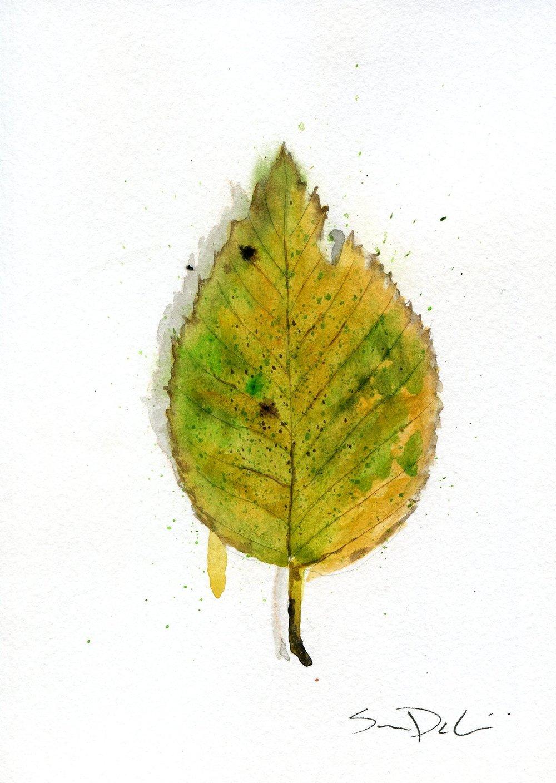 Leaf 029.jpg