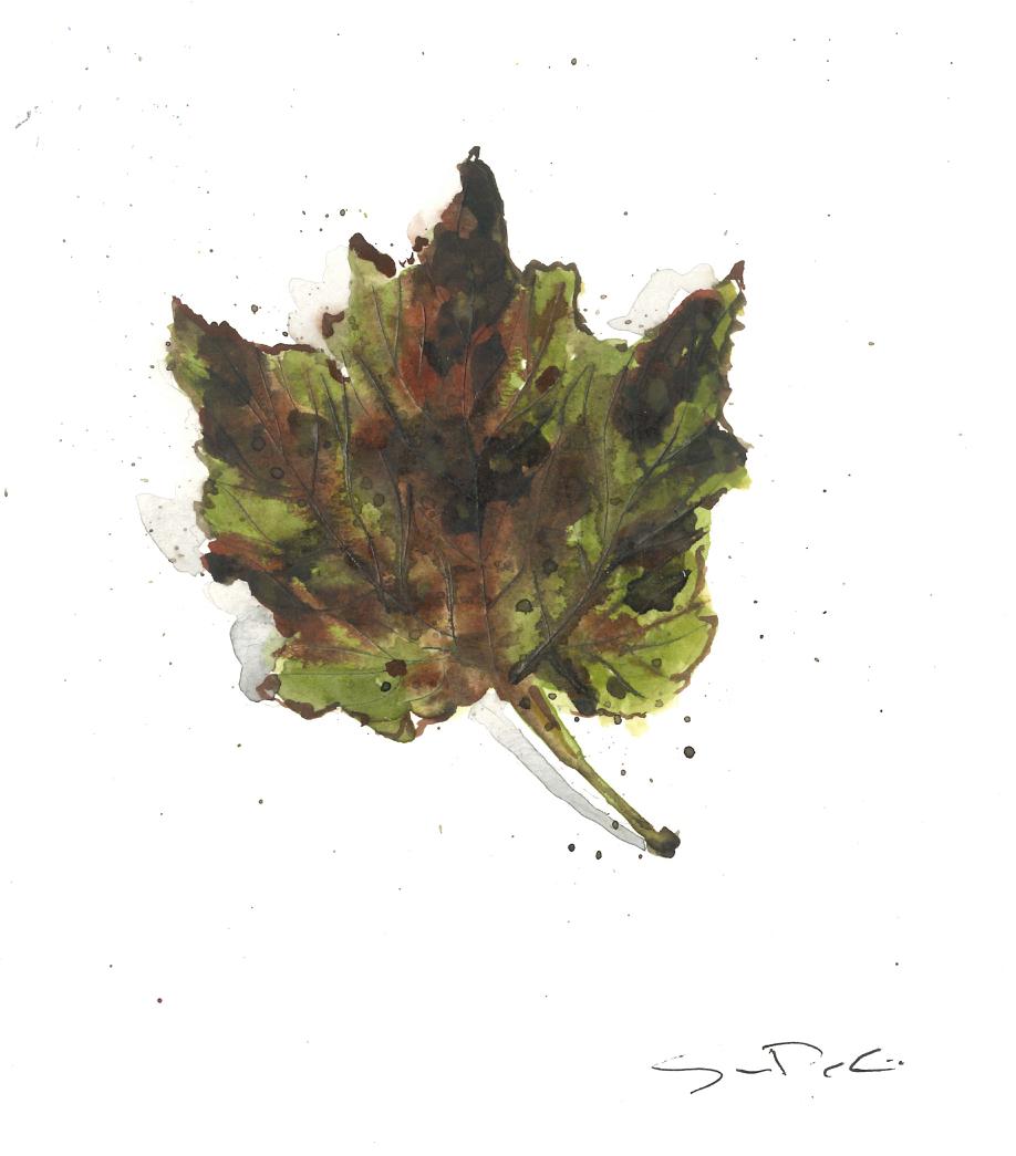 Leaf 47.jpg