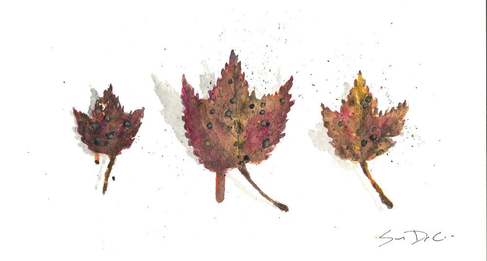 Leaf 57.jpg