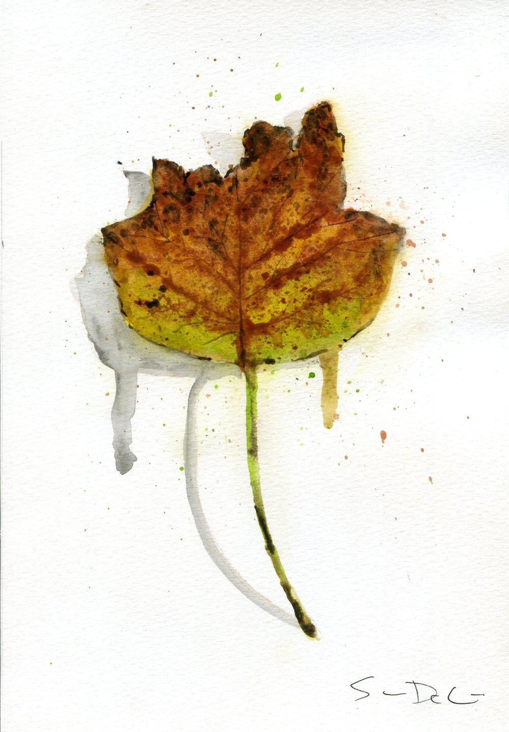 Tulip Poplar Portrait 009