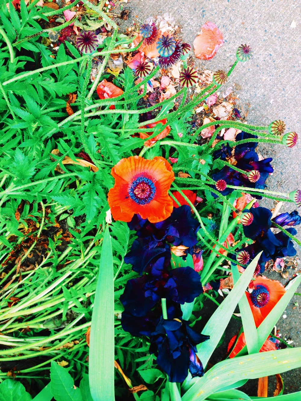 Color Inspiration, Poppies + Gladiolus