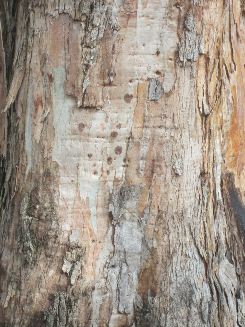 This is one of my photographs taken of a tree's surface that I extract texture samples from and use repeatedly. As I develop it, I paint into the forms giving more precise detail and color