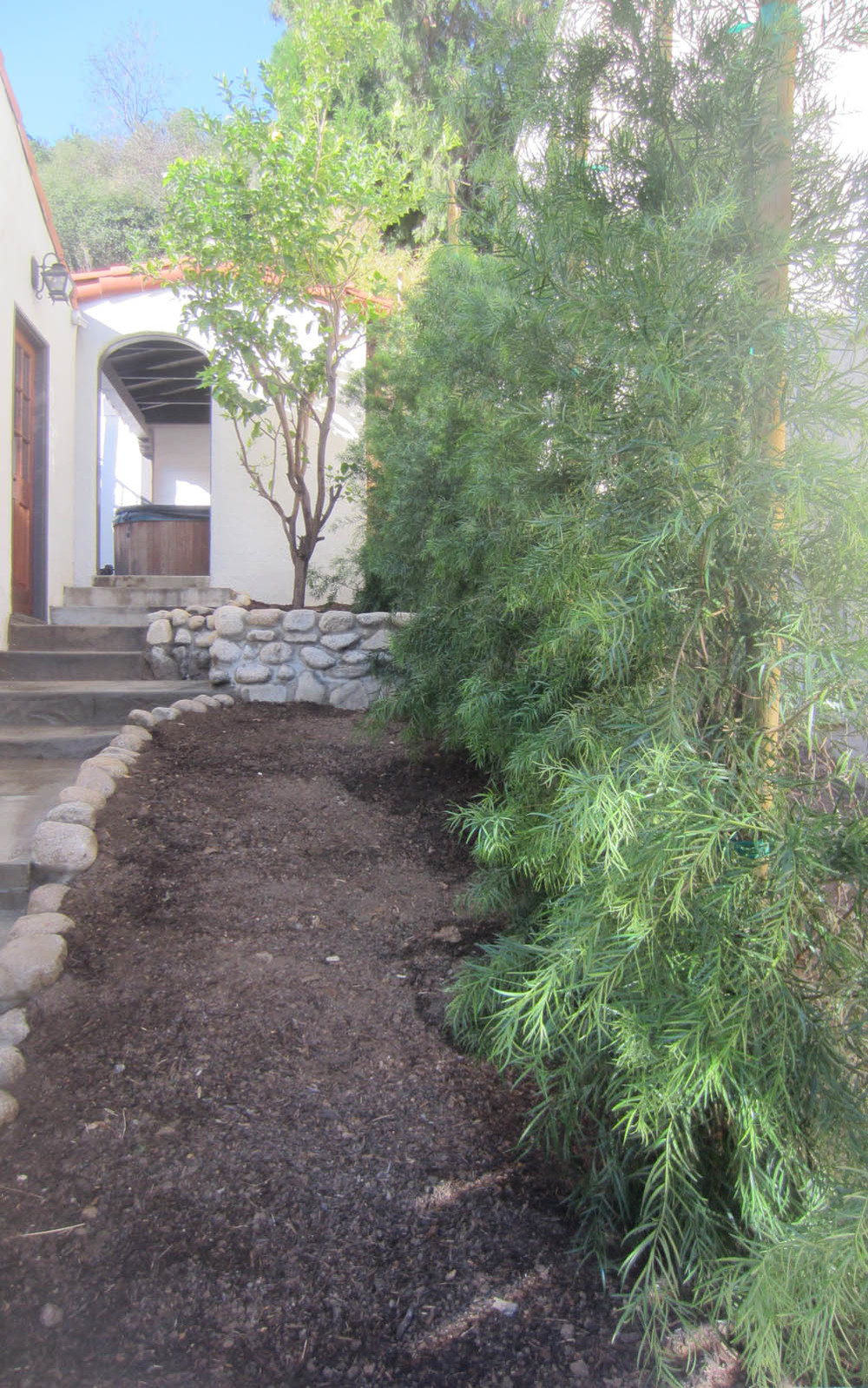 The Fern Pine Forest is planted.
