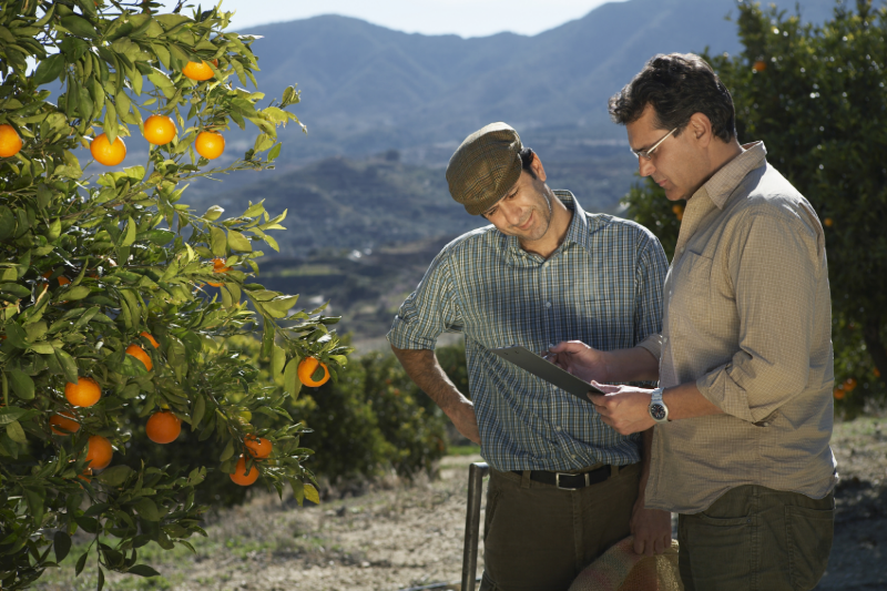 A citrus grower participates in an inspection