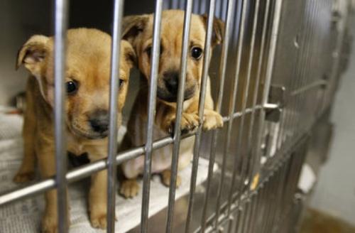 animal-shelter.jpg