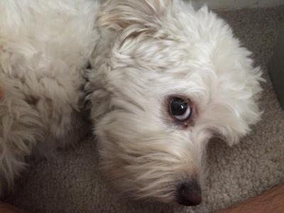 My dog listening