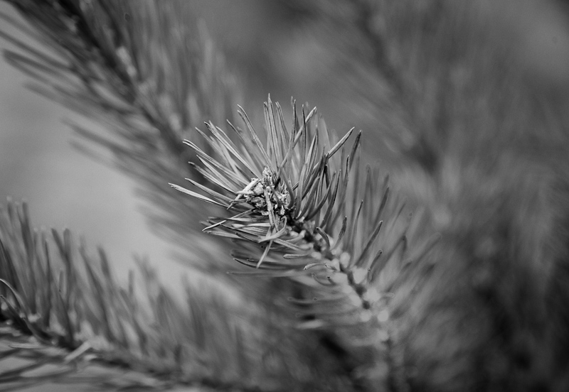 Tree end