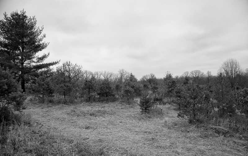 Field of (some) trees