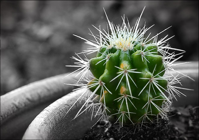 little_cactus.jpg