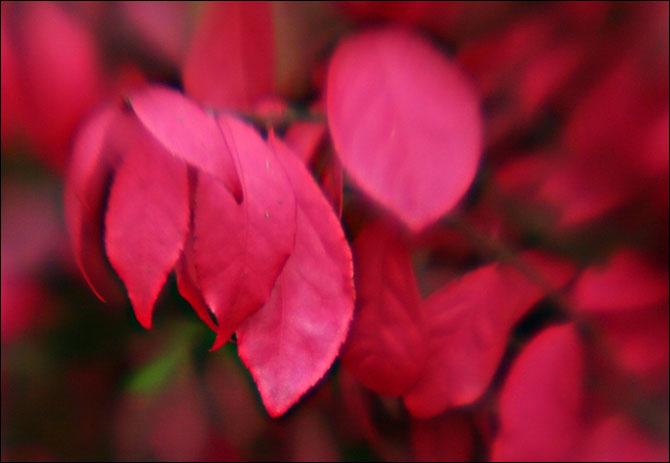 redleaves.jpg